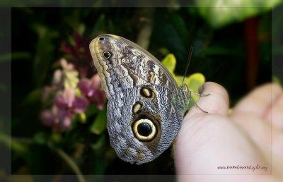 ButterflyHand