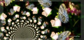 butterflyKaleidoscope