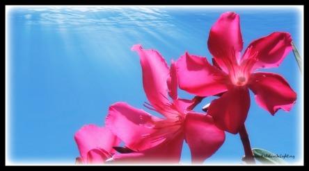 UnderwaterBlossom